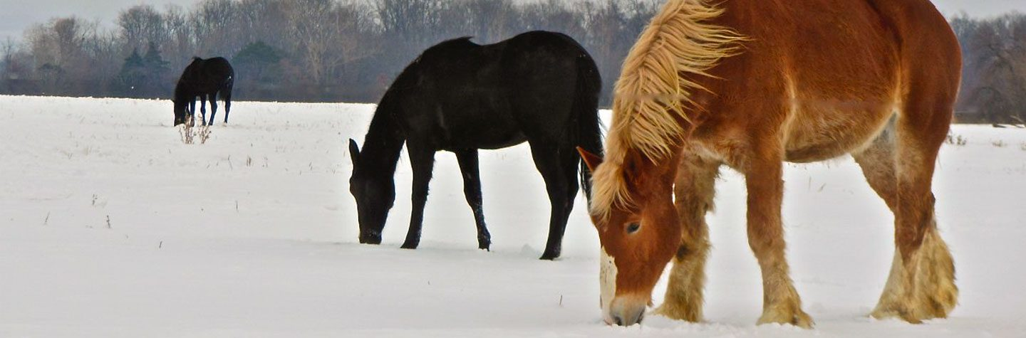 Equine Feed for Horses